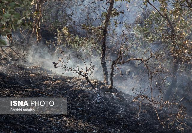 علت آتش سوزی مراتع جم، عوامل انسانی بود