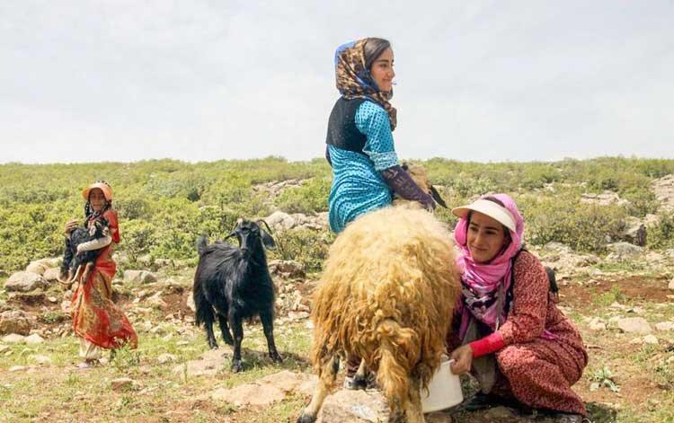 زنان عشایر؛ فعالان گمنام مالی