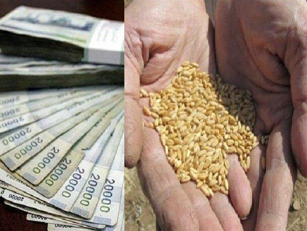قیمت 2200 تومانی خرید تضمینی گندم باید بازنگری شود