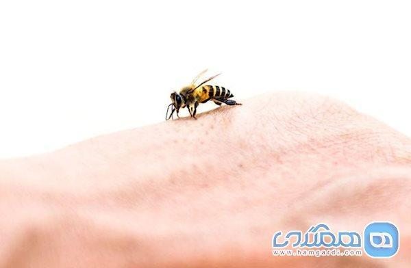 با زنبور گزیدگی در سفر چه کنیم؟
